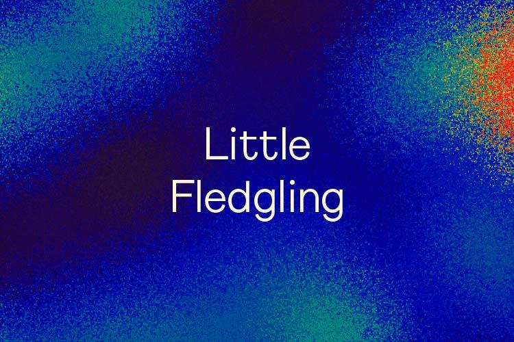 Little Fledgling